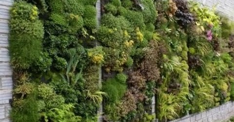 Vertical Garden Design Ideas (Taman Vertikal)